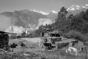 Nepal_114