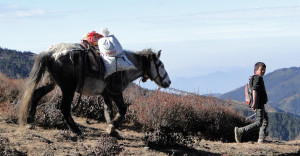 104 JP Jeune homme et cheval